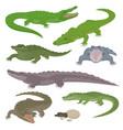 green crocodile and alligator reptile wild animals vector image vector image