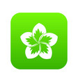 frangipani flower icon digital green vector image