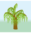 weeping willow vector image vector image