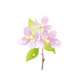 cherry blossom sakura flower floral icon vector image