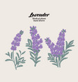 hand drawn lavender branches with leaves and vector image vector image