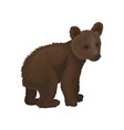 little bear cub wild northern forest animal vector image vector image