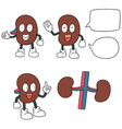 set of kidney cartoon vector image