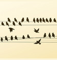 silhouettes of a flock of birds vector image