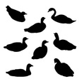 Waterfowl Birds Set vector image