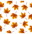 brown maple leaves isolated on white background vector image vector image