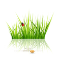 grass with ladybird vector image vector image