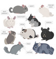 chinchilla breeds icon set flat style isolated on vector image vector image