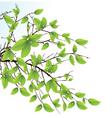 evergreen tree vector image vector image