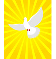 White Dove in sunny radiance Divine light and vector image vector image