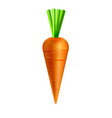 carrot isolated on white background vector image vector image