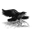raven on white vector image vector image