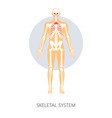skeletal system human anatomy isolated anatomical vector image vector image