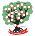 genealogical tree vector image