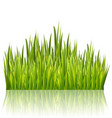 green grass border isolated on white glossy vector image