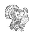 turkey bird sketch engraving vector image
