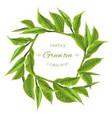 Green tea wreath vector image