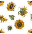 hand drawn seamless pattern with sunflowers vector image vector image