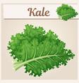 kale vegetable icon cartoon vector image