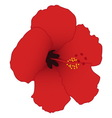 Red hibiscus isolated on white background vector image
