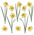 set color with yellow daffodils vector image