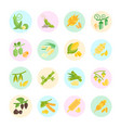 set flat icons beans and cereals vector image