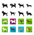 dog breeds blackflet icons in set collection for vector image