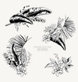 monochrome set of tropical leaves exotic vector image