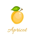 Orange apricot icon vector image
