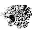 snarling face a leopard painted hand vector image vector image
