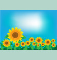 a field of sunflowers and a clear sky vector image