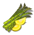 Bunch of asparagus with lemon vegetables vector image