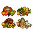 exotic fruits sketch harvest vector image vector image