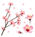 prunus persica - peach flower blossom vector image vector image