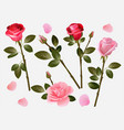 red rose plant love flowers beautiful red buds vector image vector image