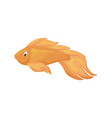 sea fish aquarium cartoon animal character vector image vector image