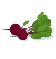 Beetroot Vegetable on White Background vector image vector image