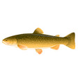 lake trout fish vector image
