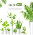 Realistic 3d detailed house plant concept banner