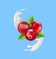 red cranberry in milk splash or yogurt vector image vector image