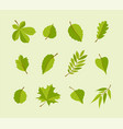 types of leaves - modern flat design icons vector image vector image
