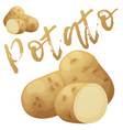 whole and half potato vegetable cartoon vector image vector image