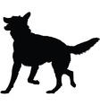 german shepherd silhouette vector image vector image