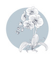 hand drawn sketch line orchids flower vector image