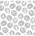 botanical of monstera leaf vector image vector image
