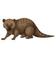 Wild animal with brown fur vector image vector image