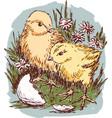 newborn chickens in the grass vector image
