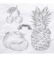 Fruit cherry mango pineapple vintage vector image vector image