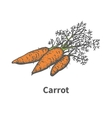 hand-drawn carrots with tops vector image vector image