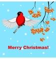 christmas card with bullfinch and rowan vector image